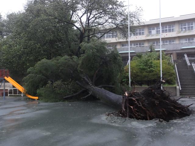 台風 15 号 被害